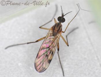 insectes autres sylvicole des fen tres plumedeville. Black Bedroom Furniture Sets. Home Design Ideas